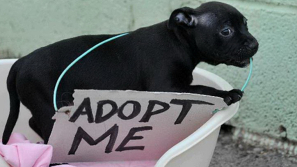Picture of a dog with an adopt me sign round its neck